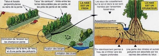 D forestation et probl me du bois de chauffage dans le haut atlas marocain - Quoi planter en novembre ...